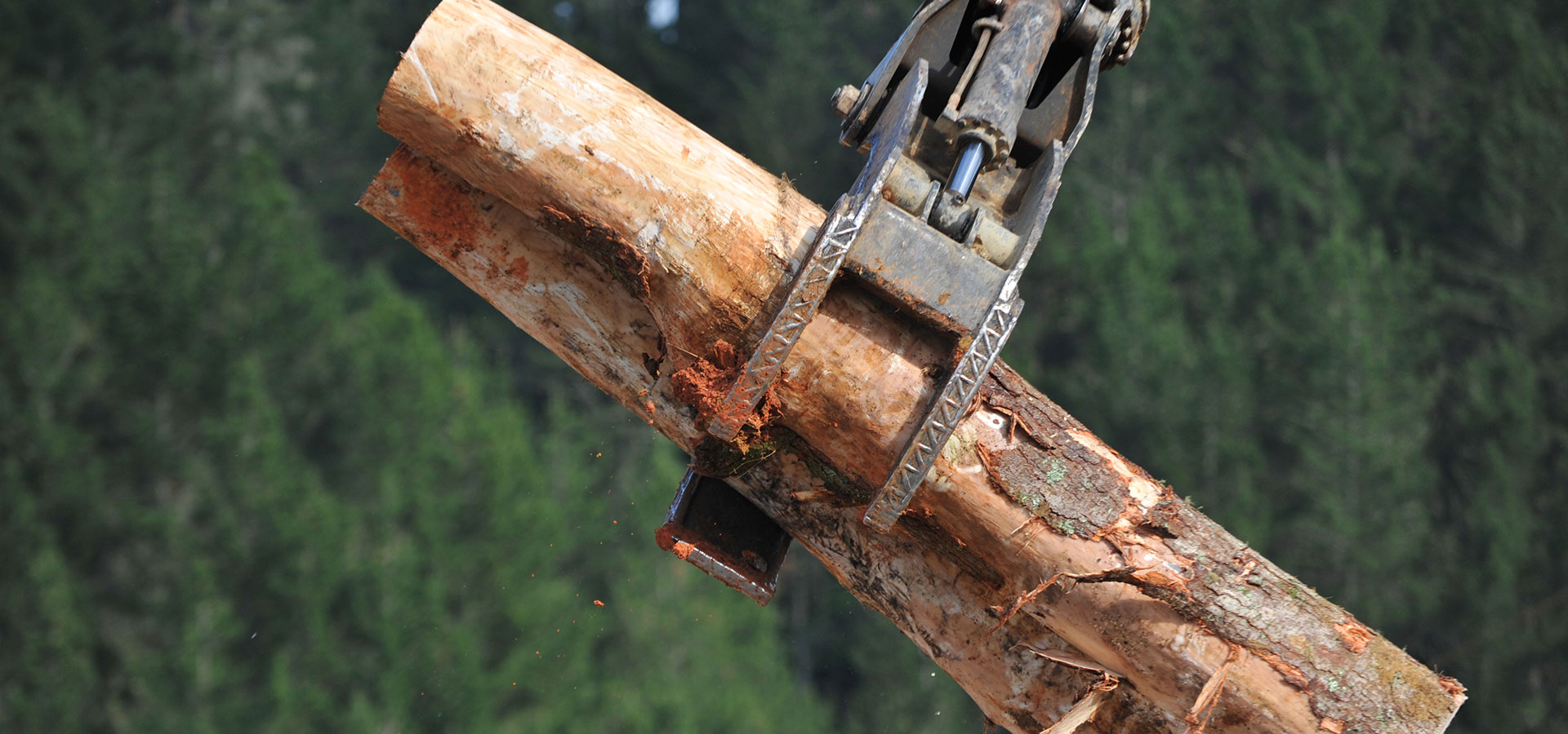 Ribbonwood NZ buys logs