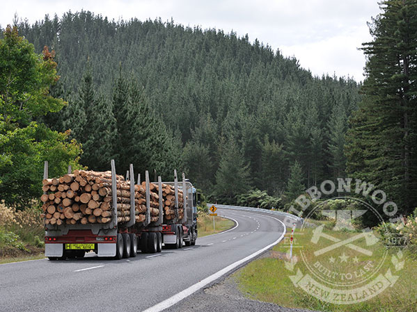 Ribbonwood manages forest health
